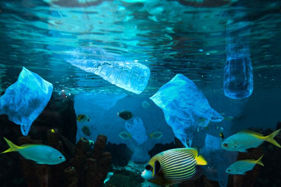 Ρύπανση του Περιβάλλοντος και Διαχείριση Φυσικών Πόρων